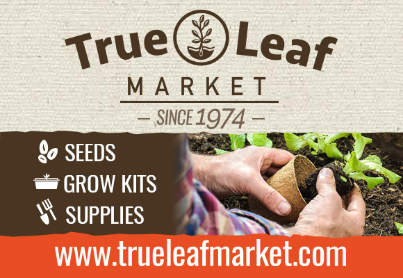 Shop Your Trusted Non-GMO Seed Source Since 1974! Shop True Leaf Market!